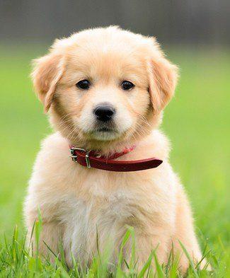 Cuida la alimentación de los cachorros