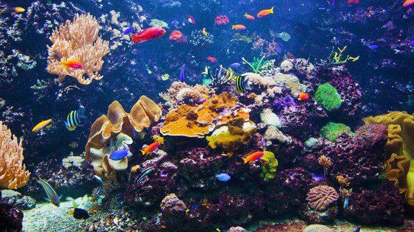 Tipos de peces que no pueden vivir en un acuario - Peceras pequenas decoradas ...