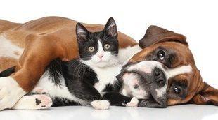Perros y gatos senior: todo lo que necesitas saber sobre sus cuidados