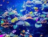 Cómo crear un acuario tropical