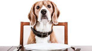 Restaurantes a los que puedes acceder con tu perro