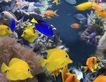 Los peces más fáciles de cuidar: agua dulce