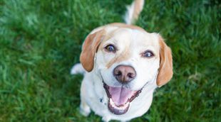 Los perros también tienen sentimientos, ¿son capaces de reír?