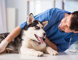 Qué puedo hacer si mi mascota tiene miedo al veterinario