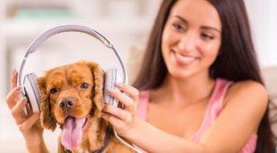 Los beneficios de la música para tu perro
