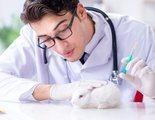 Todo lo que debes saber sobre la esterilización y castración en conejos