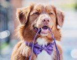Diferencias entre adiestrador, educador canino y etólogo