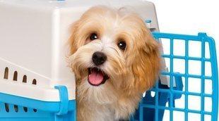 Cómo acostumbrar a tu perro a estar en el transportín