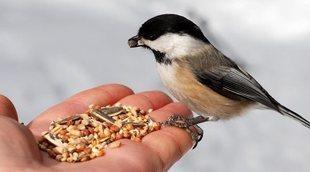 Alimentos tóxicos para aves de compañía