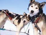 Perro de Groenlandia: conoce todo sobre esta raza de perro