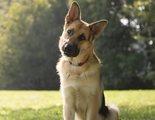 Cómo potenciar la inteligencia de los perros