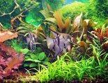 Plantas de acuario: conoce cuáles son las más adecuadas