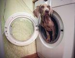 Cómo son las máquinas de lavado para perros