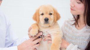 Cómo prevenir enfermedades en perros