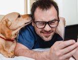Finding Rover: Reconocimiento facial para encontrar perros perdidos
