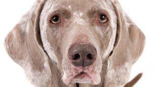 Vitíligo en perros: todo lo que necesitas saber