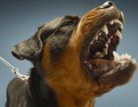 ¿Por qué un perro se vuelve agresivo?