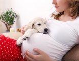 Tener un perro durante el embarazo: todas las ventajas que conlleva
